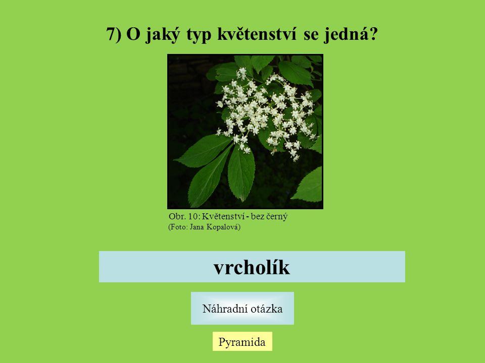 7) O jaký typ květenství se jedná