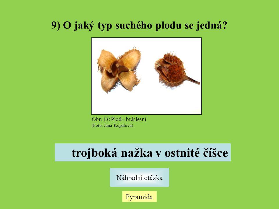 9) O jaký typ suchého plodu se jedná trojboká nažka v ostnité číšce