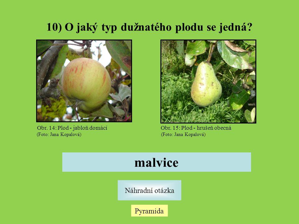 10) O jaký typ dužnatého plodu se jedná