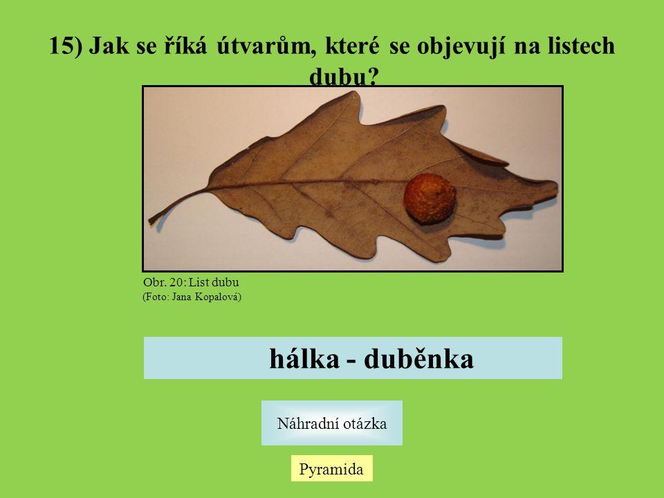 15) Jak se říká útvarům, které se objevují na listech dubu