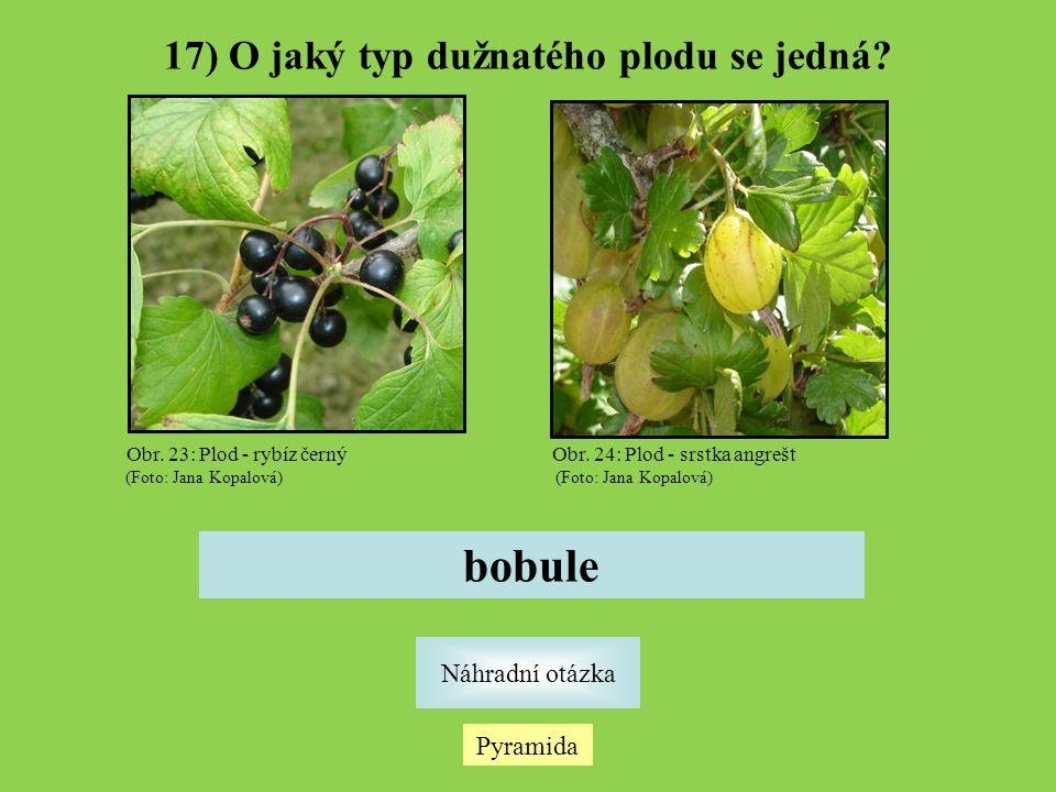 17) O jaký typ dužnatého plodu se jedná