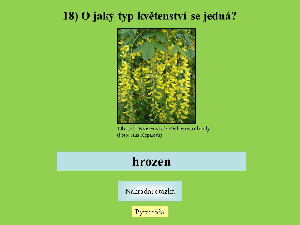 18) O jaký typ květenství se jedná