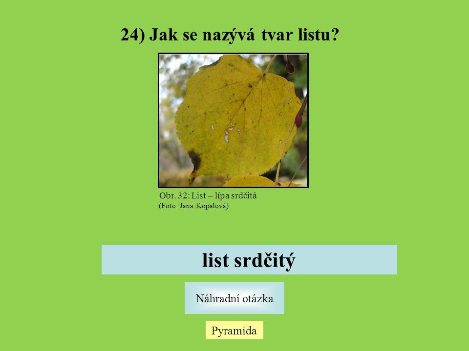 24) Jak se nazývá tvar listu