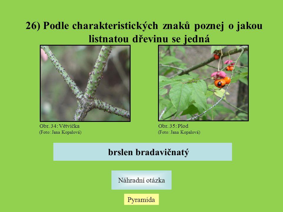 26) Podle charakteristických znaků poznej o jakou listnatou dřevinu se jedná