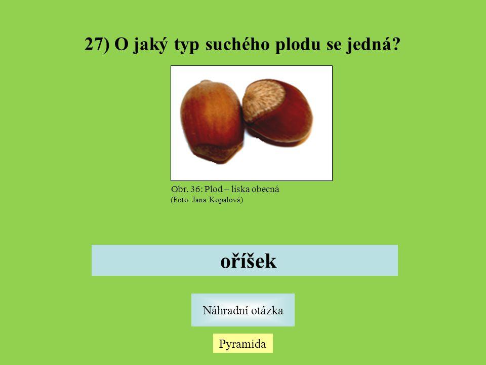 27) O jaký typ suchého plodu se jedná