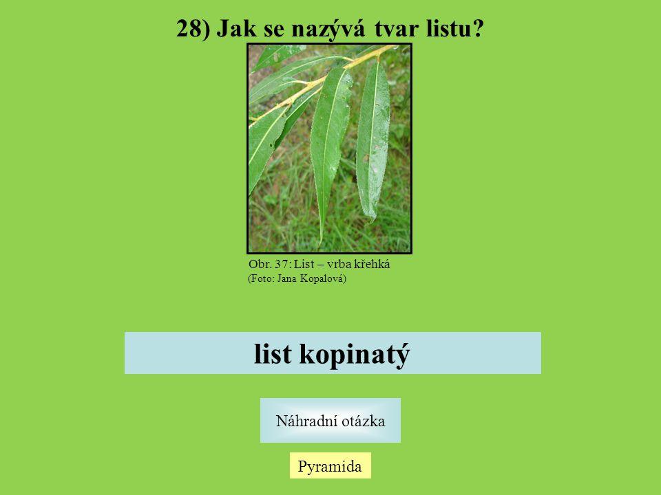28) Jak se nazývá tvar listu