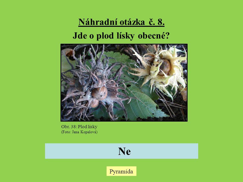 Náhradní otázka č. 8. Jde o plod lísky obecné