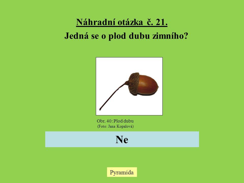 Jedná se o plod dubu zimního
