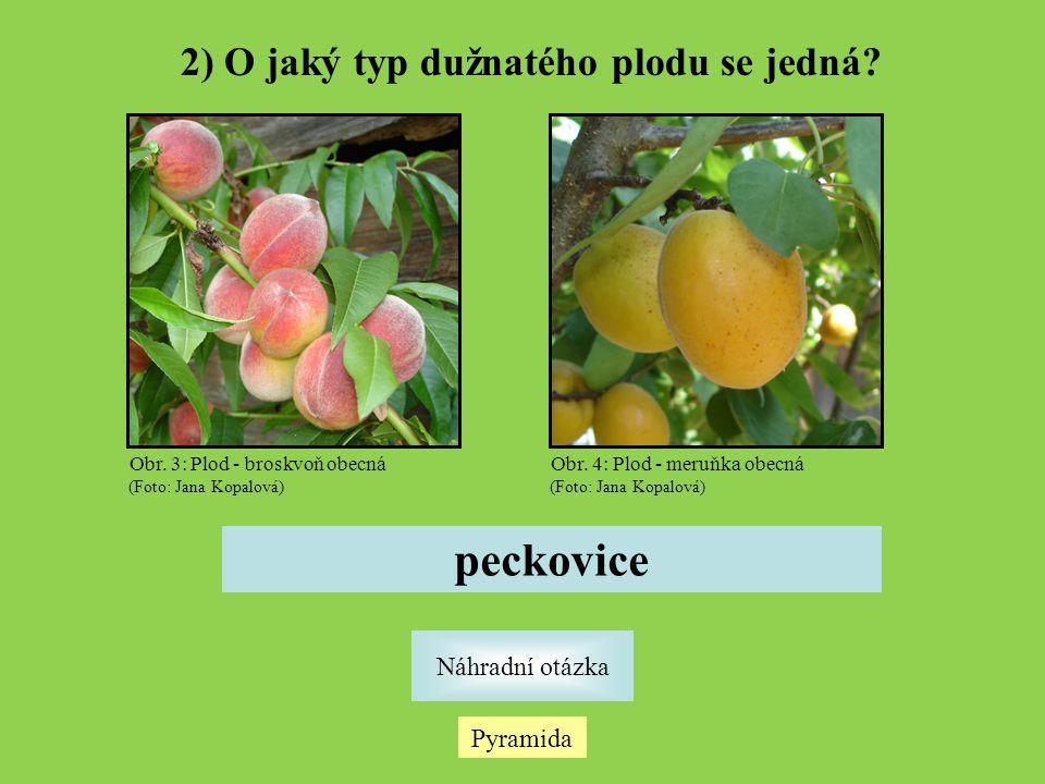 2) O jaký typ dužnatého plodu se jedná