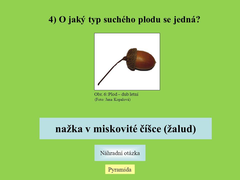 4) O jaký typ suchého plodu se jedná nažka v miskovité číšce (žalud)