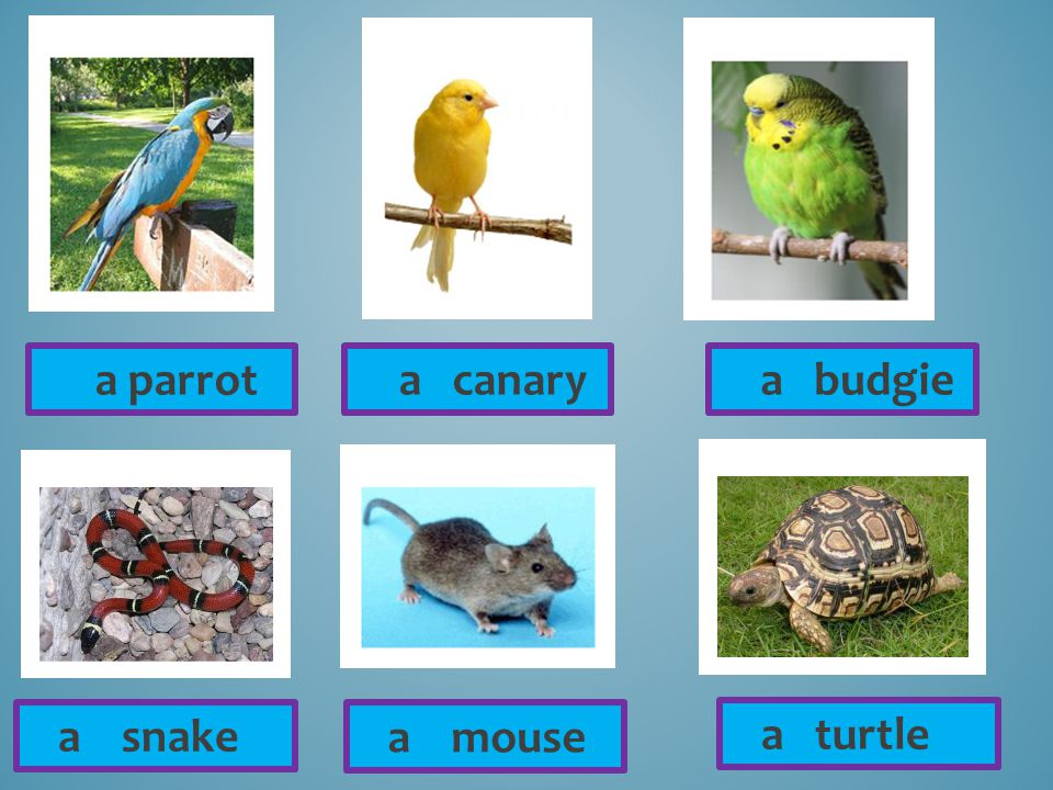 a parrot a canary a budgie a snake a mouse a turtle
