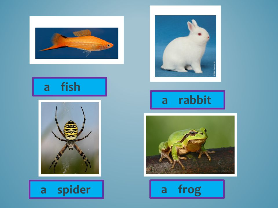 a fish a rabbit a spider a frog
