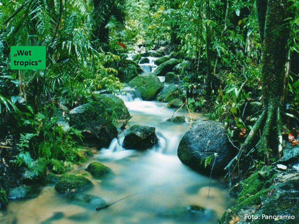 """""""Wet tropics Foto: Panoramio"""