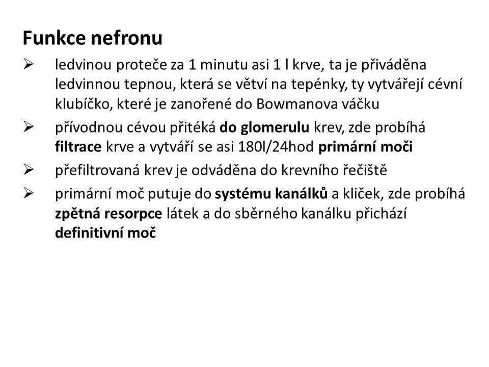 Funkce nefronu