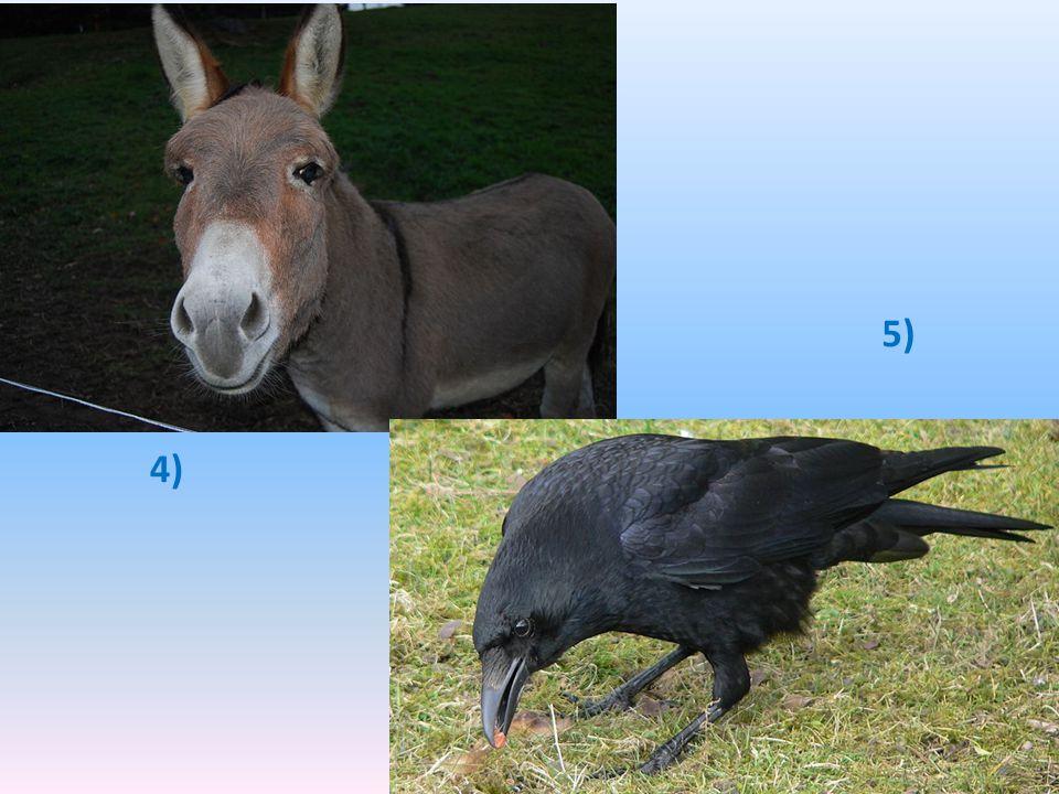 5) 4)