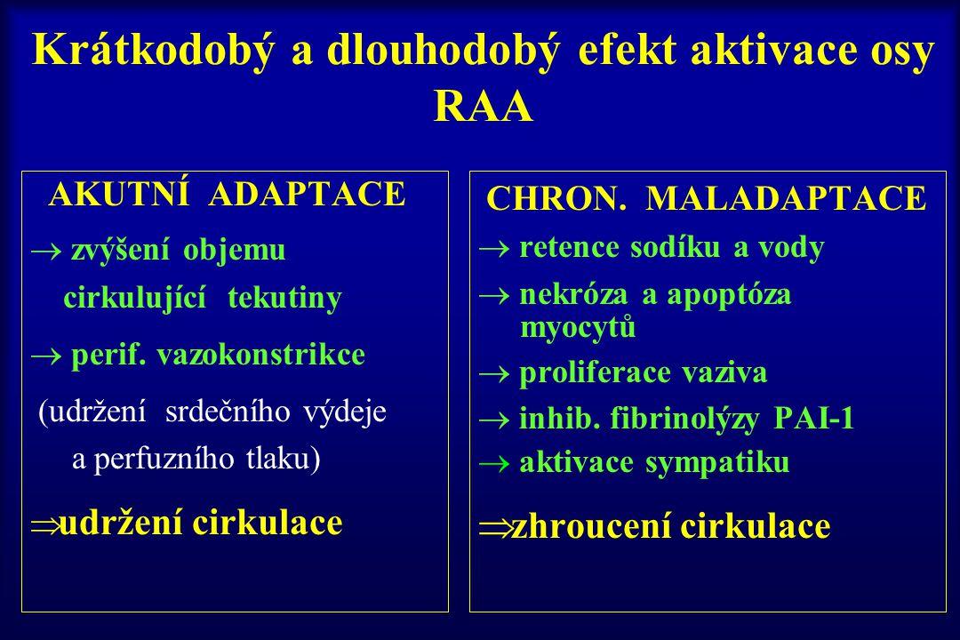 Krátkodobý a dlouhodobý efekt aktivace osy RAA