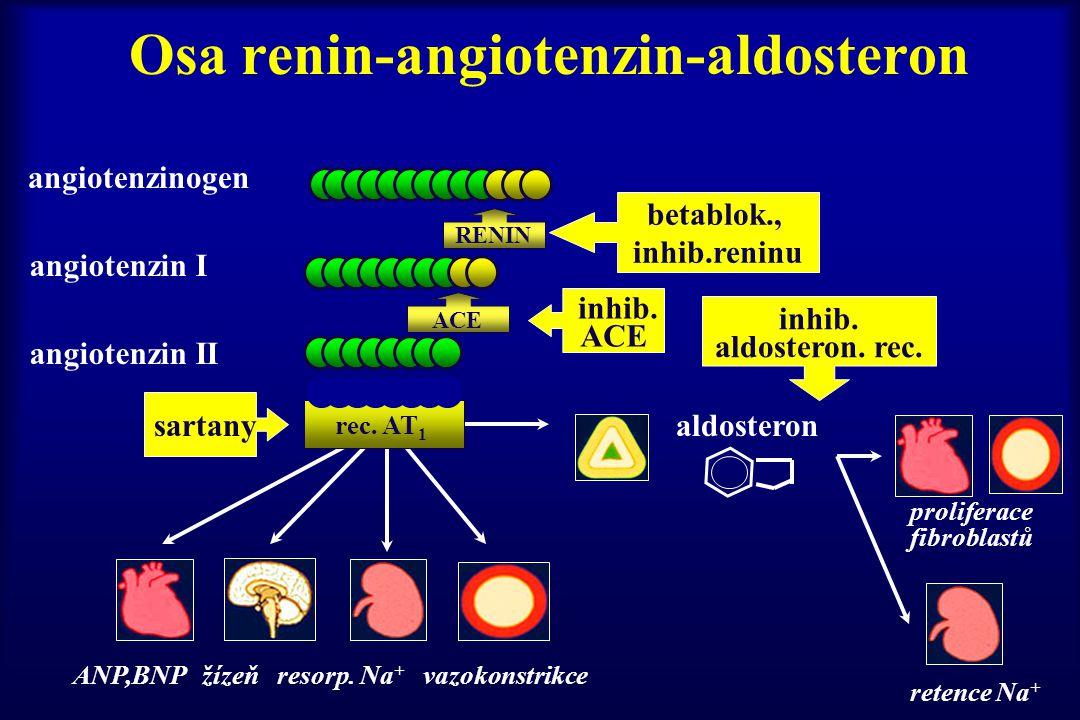 Osa renin-angiotenzin-aldosteron