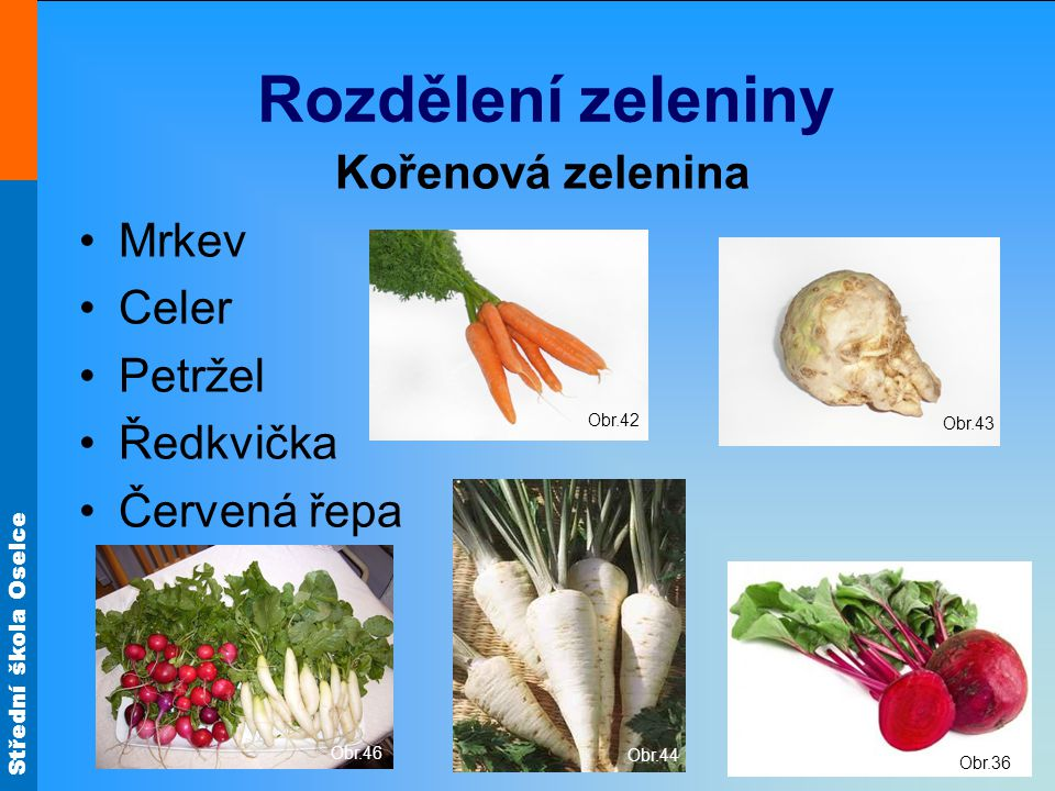Rozdělení zeleniny Kořenová zelenina Mrkev Celer Petržel Ředkvička