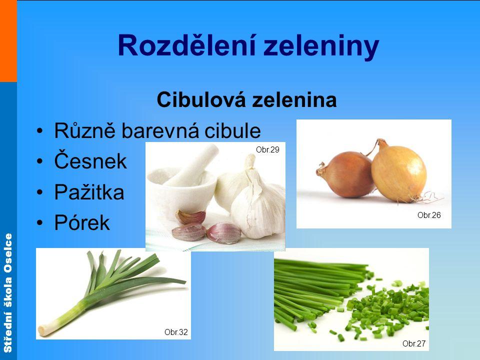 Rozdělení zeleniny Cibulová zelenina Různě barevná cibule Česnek