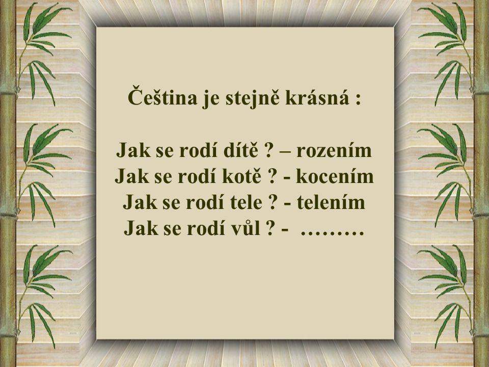 Čeština je stejně krásná : Jak se rodí dítě . – rozením Jak se rodí kotě .