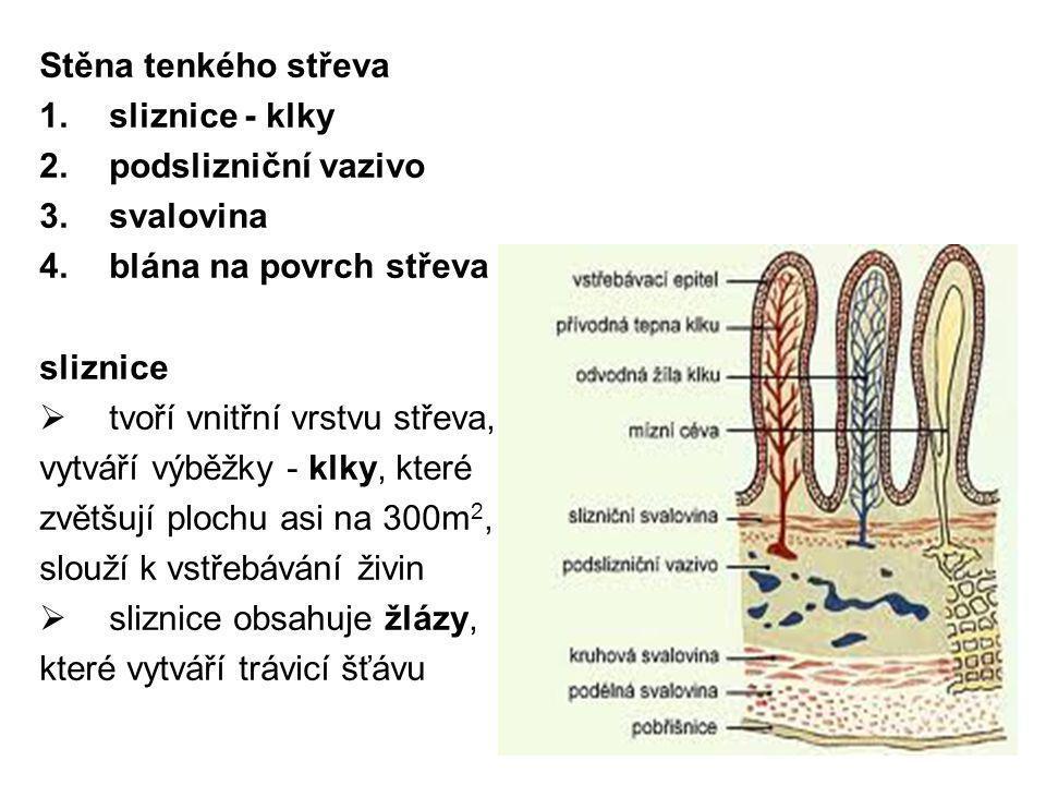 Stěna tenkého střeva sliznice - klky. podslizniční vazivo. svalovina. blána na povrch střeva. sliznice.