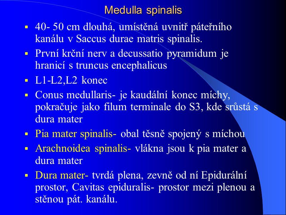 Medulla spinalis 40- 50 cm dlouhá, umístěná uvnitř páteřního kanálu v Saccus durae matris spinalis.