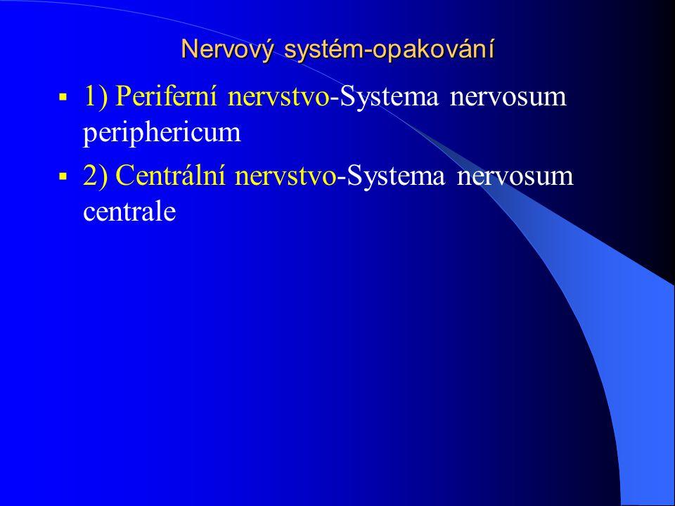 Nervový systém-opakování