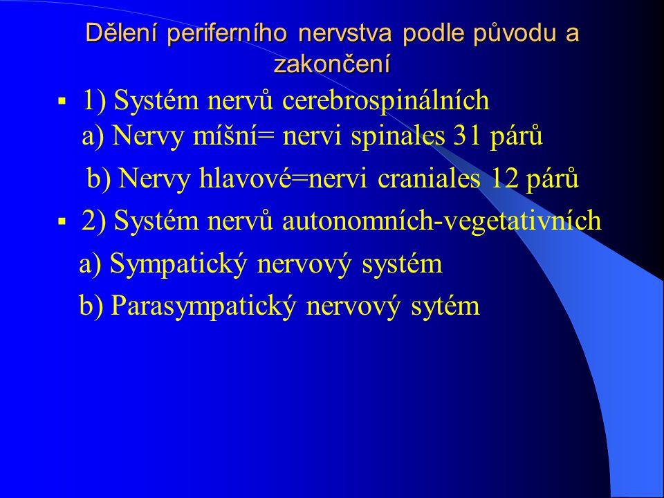 Dělení periferního nervstva podle původu a zakončení