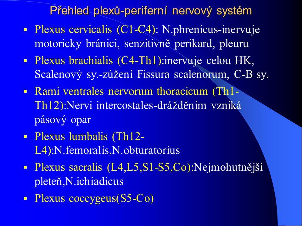 Přehled plexů-periferní nervový systém