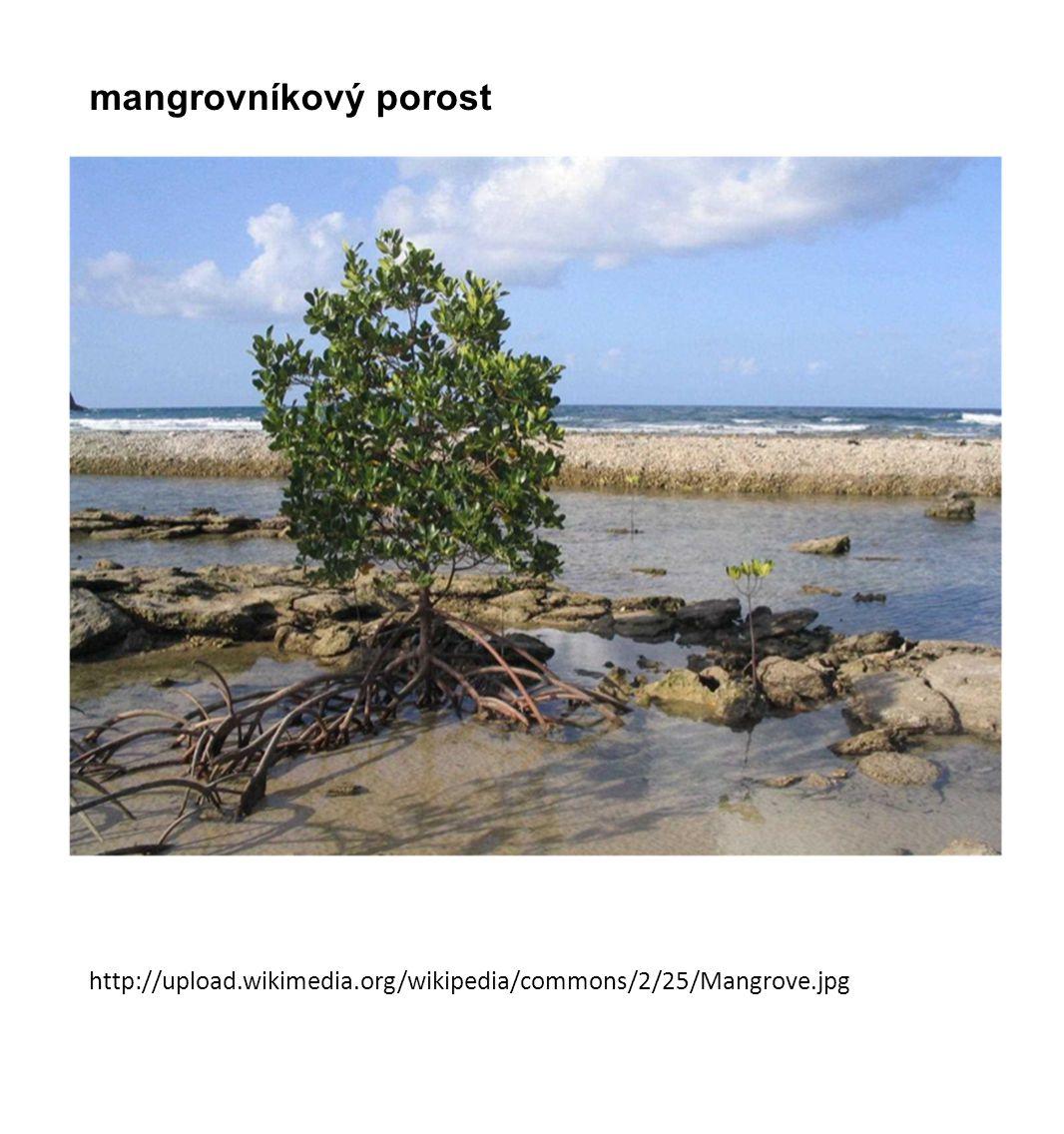 mangrovníkový porost http://upload.wikimedia.org/wikipedia/commons/2/25/Mangrove.jpg