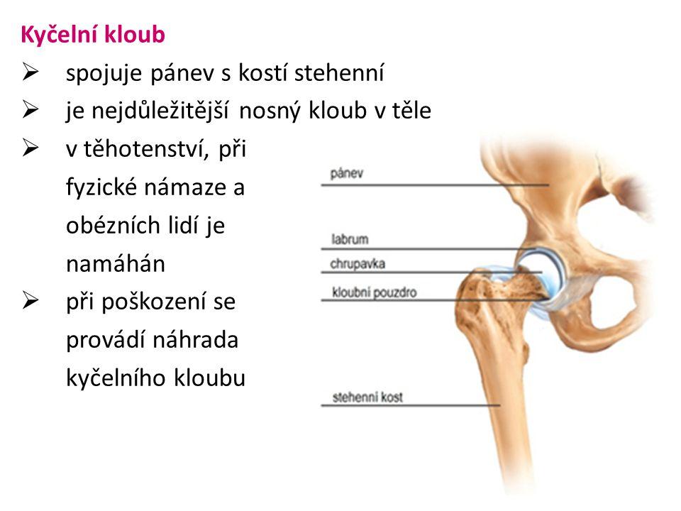 Kyčelní kloub spojuje pánev s kostí stehenní. je nejdůležitější nosný kloub v těle. v těhotenství, při.
