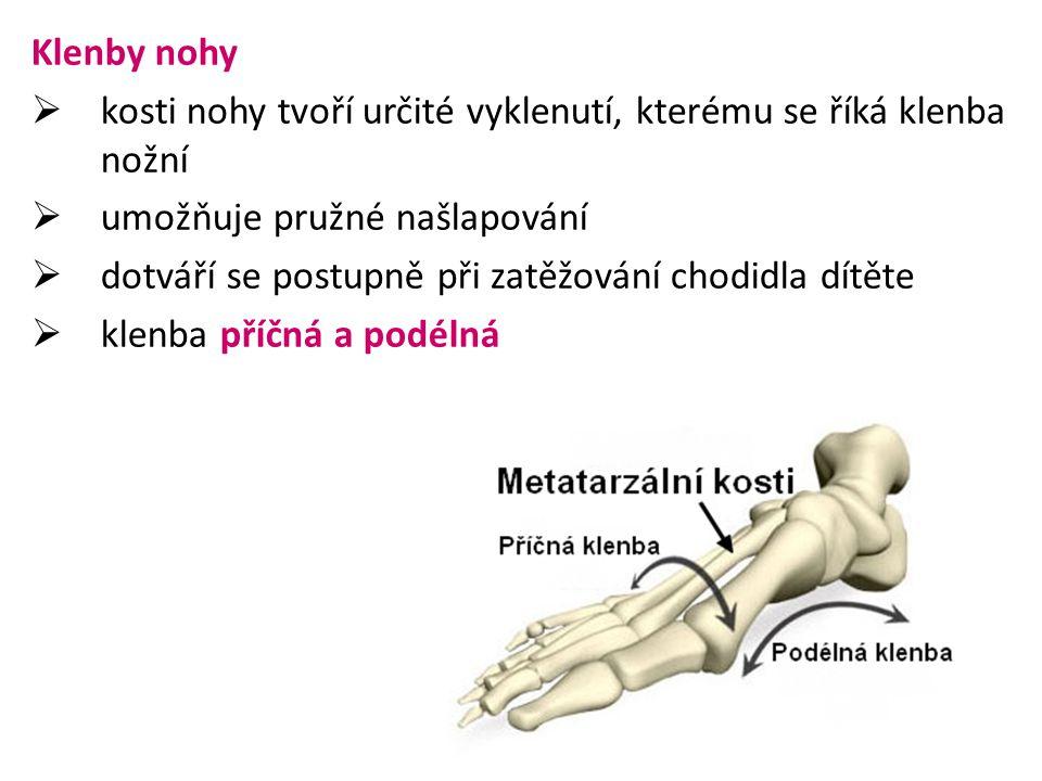 Klenby nohy kosti nohy tvoří určité vyklenutí, kterému se říká klenba nožní. umožňuje pružné našlapování.