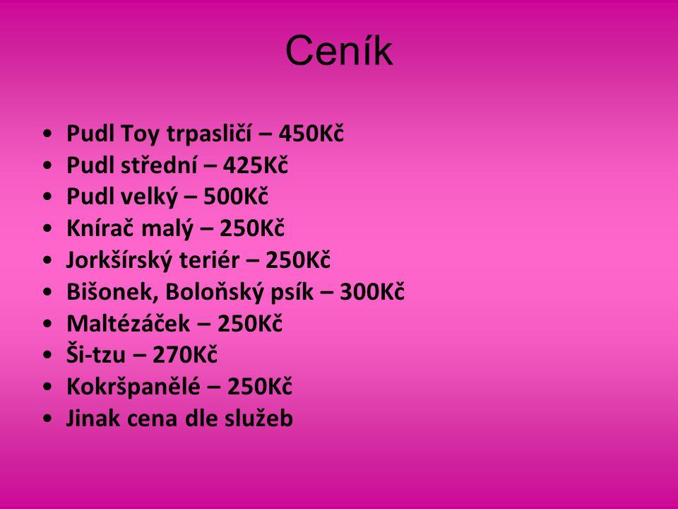 Ceník Pudl Toy trpasličí – 450Kč Pudl střední – 425Kč