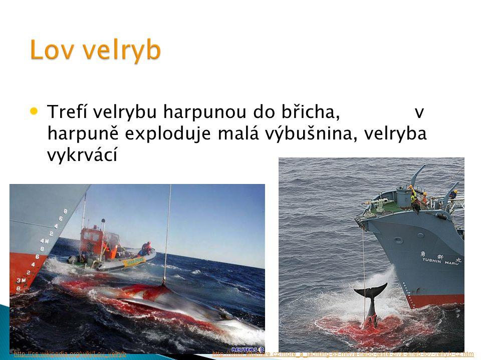 Lov velryb Trefí velrybu harpunou do břicha, v harpuně exploduje malá výbušnina, velryba vykrvácí.