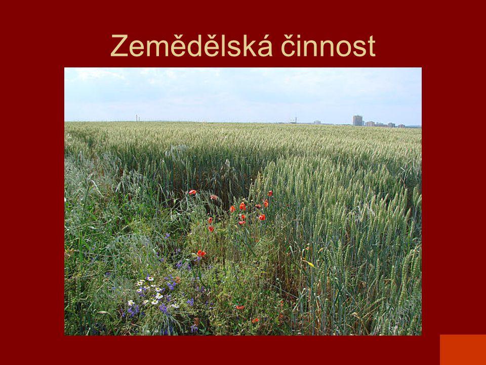 Zemědělská činnost