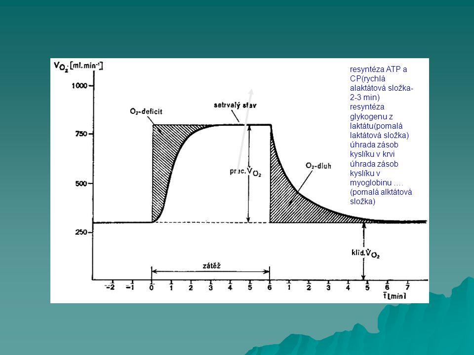 resyntéza ATP a CP(rychlá alaktátová složka-2-3 min)