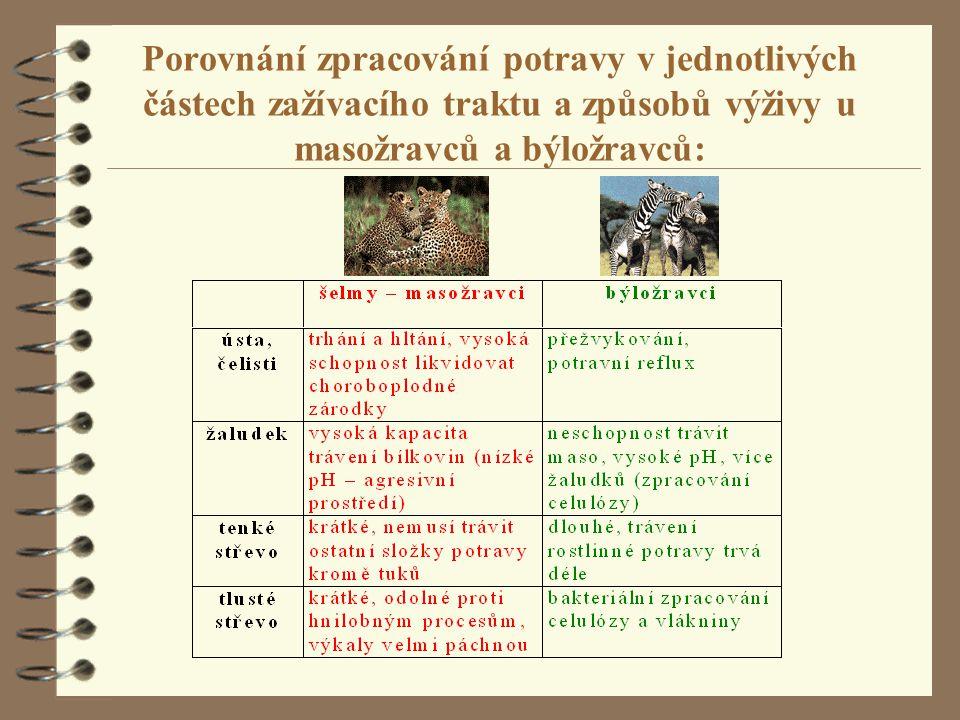 Porovnání zpracování potravy v jednotlivých částech zažívacího traktu a způsobů výživy u masožravců a býložravců: