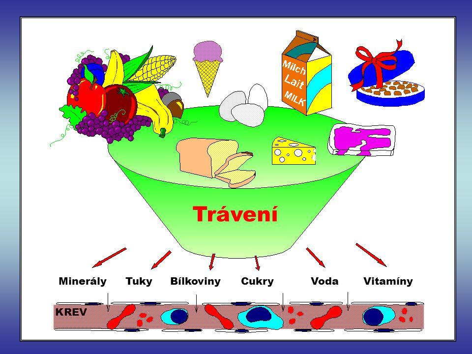 Trávení Minerály Tuky Bílkoviny Cukry Voda Vitamíny KREV
