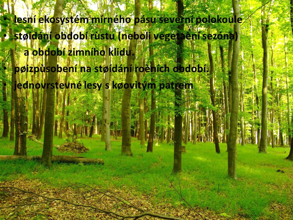 lesní ekosystém mírného pásu severní polokoule
