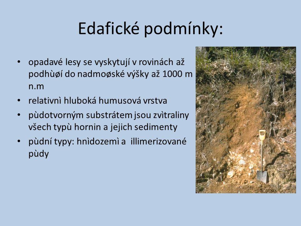 Edafické podmínky: opadavé lesy se vyskytují v rovinách až podhùøí do nadmoøské výšky až 1000 m n.m.