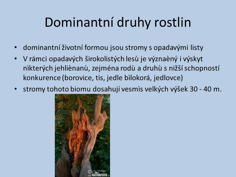 Dominantní druhy rostlin