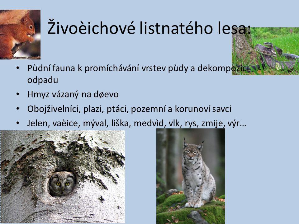 Živoèichové listnatého lesa: