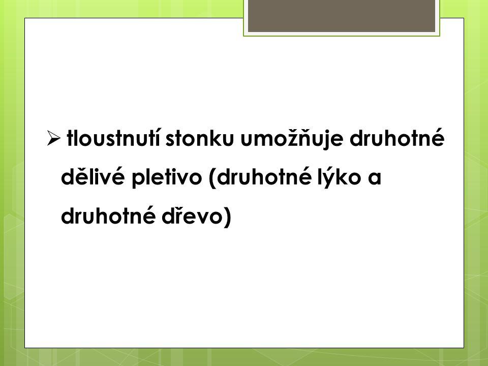 tloustnutí stonku umožňuje druhotné dělivé pletivo (druhotné lýko a druhotné dřevo)