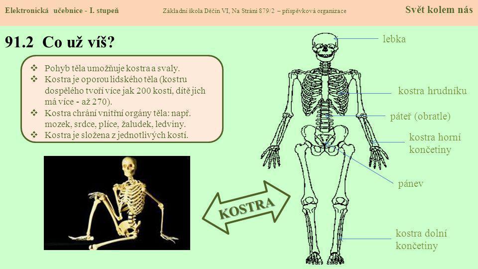 91.2 Co už víš KOSTRA lebka kostra hrudníku páteř (obratle)