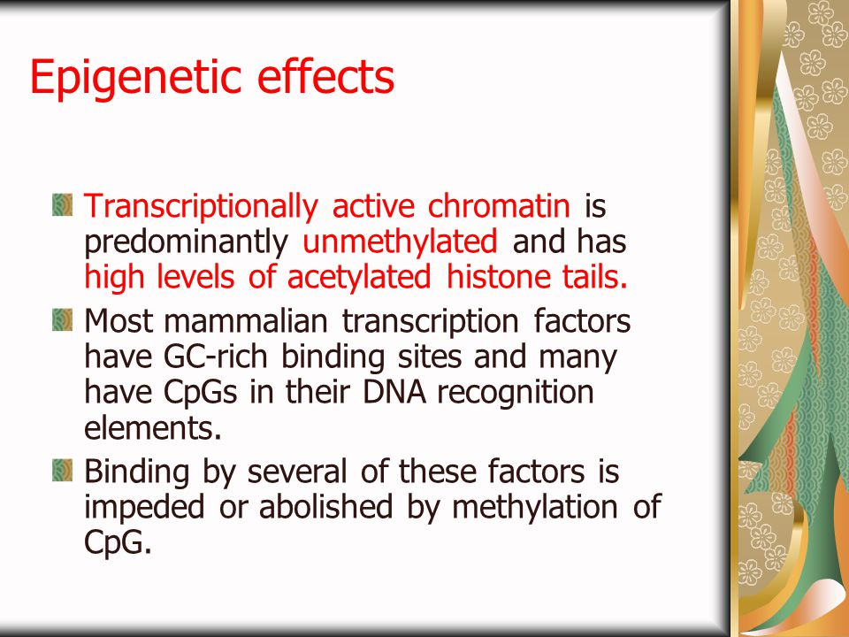 Epigenetic effects Transcriptionally active chromatin is predominantly unmethylated and has high levels of acetylated histone tails.