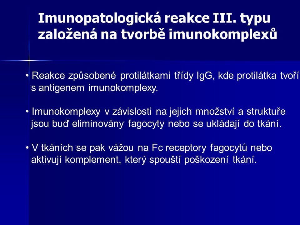 Imunopatologická reakce III. typu založená na tvorbě imunokomplexů