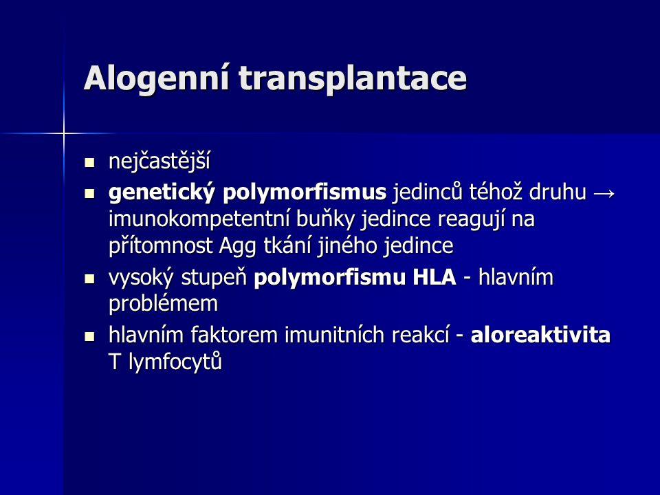 Alogenní transplantace