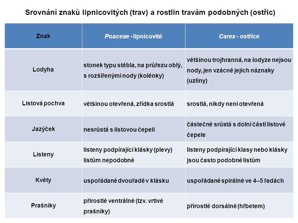 Srovnání znaků lipnicovitých (trav) a rostlin travám podobných (ostřic)