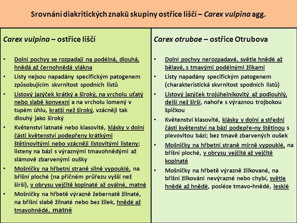 Carex vulpina – ostřice liščí Carex otrubae – ostřice Otrubova
