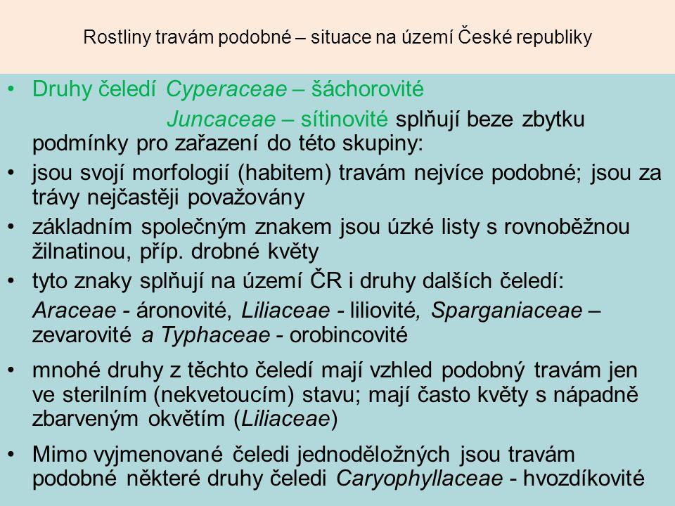 Rostliny travám podobné – situace na území České republiky